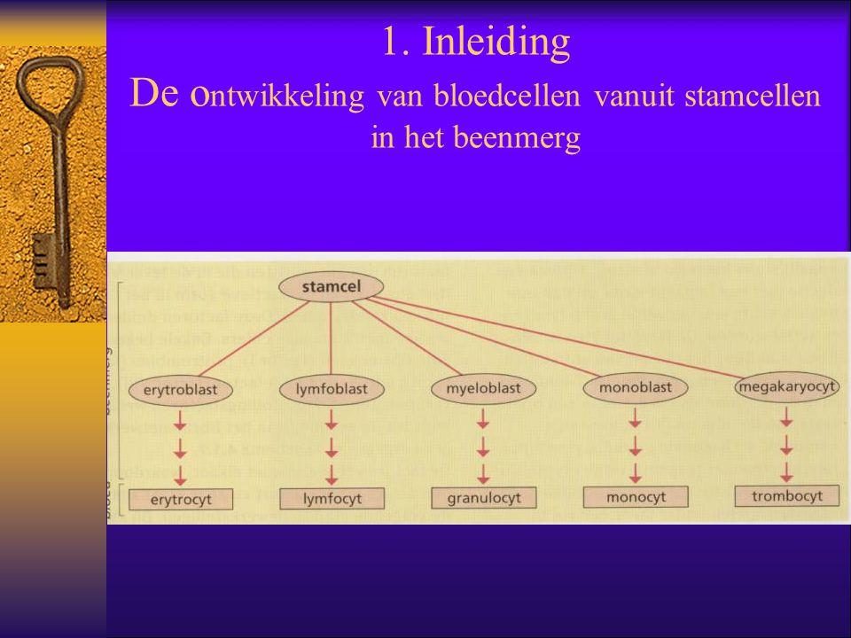 1. Inleiding De ontwikkeling van bloedcellen vanuit stamcellen in het beenmerg