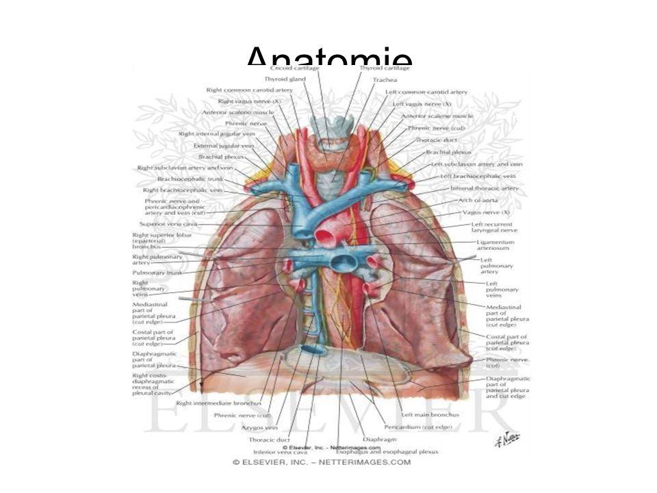 Ziemlich Halsfistel Anatomie Fotos - Anatomie Ideen - finotti.info