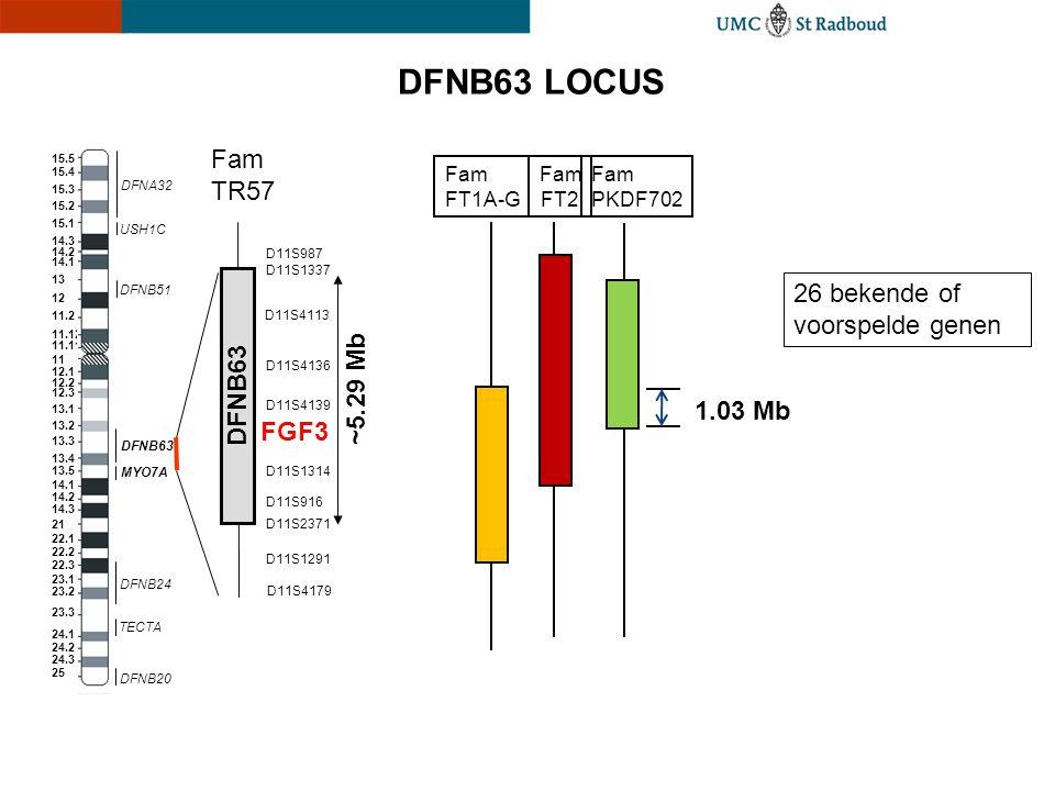 DFNB63 LOCUS Fam TR57 26 bekende of voorspelde genen ~5.29 Mb DFNB63