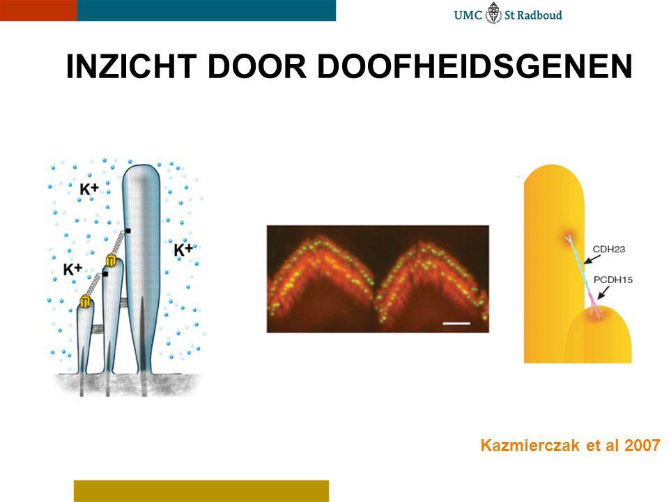 INZICHT DOOR DOOFHEIDSGENEN