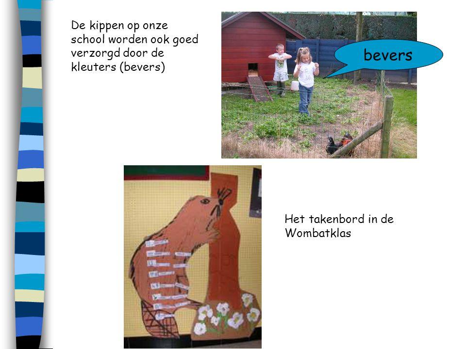 De kippen op onze school worden ook goed verzorgd door de kleuters (bevers)