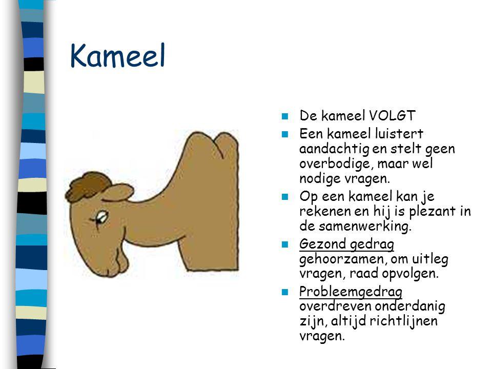 Kameel De kameel VOLGT. Een kameel luistert aandachtig en stelt geen overbodige, maar wel nodige vragen.