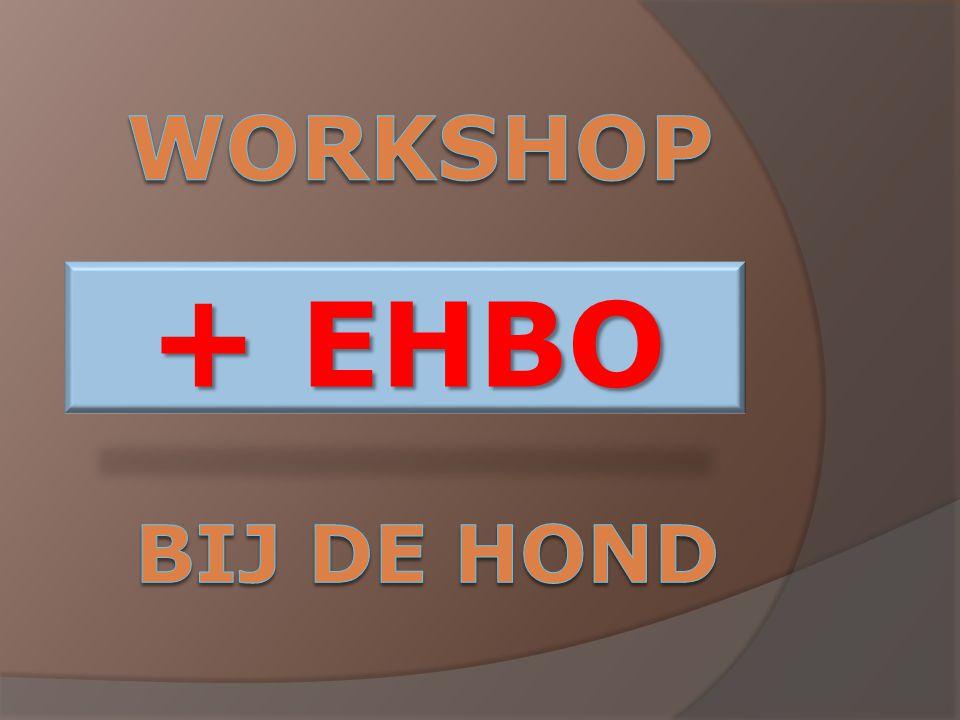 Workshop + EHBO bij de hond