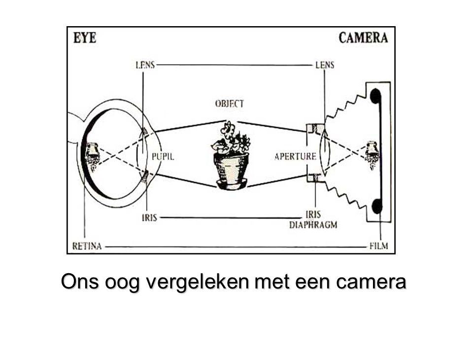 Ons oog vergeleken met een camera