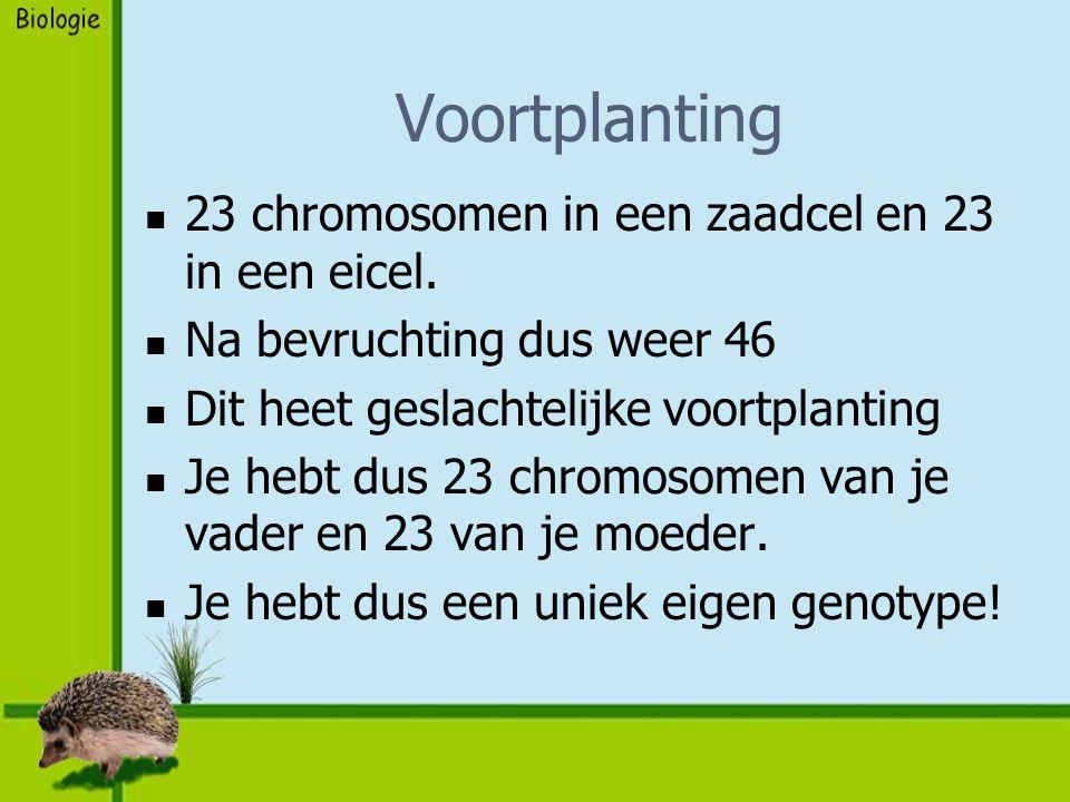Voortplanting 23 chromosomen in een zaadcel en 23 in een eicel.