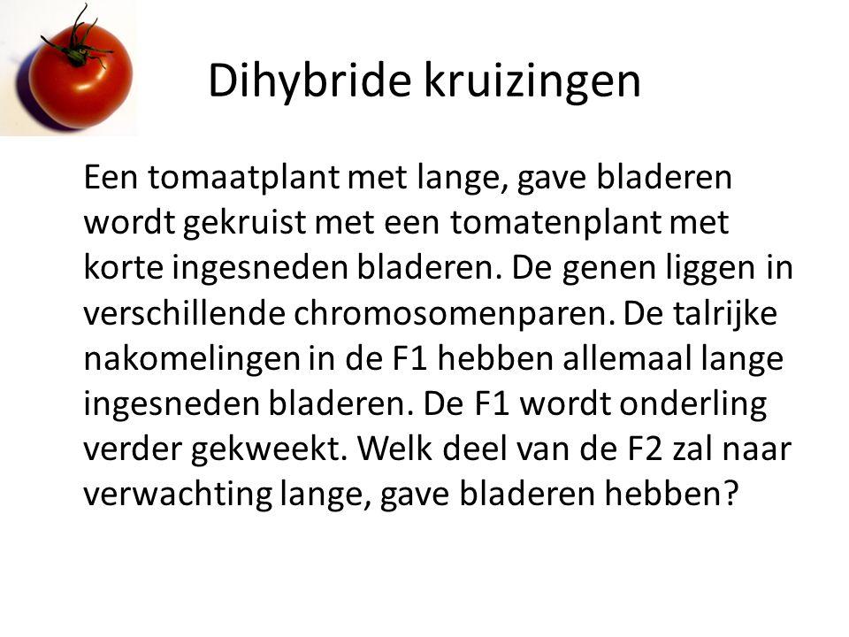 Dihybride kruizingen