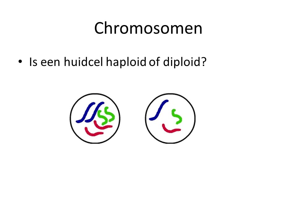 Chromosomen Is een huidcel haploid of diploid