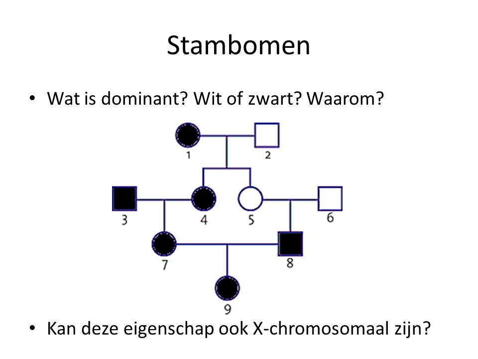 Stambomen Wat is dominant Wit of zwart Waarom