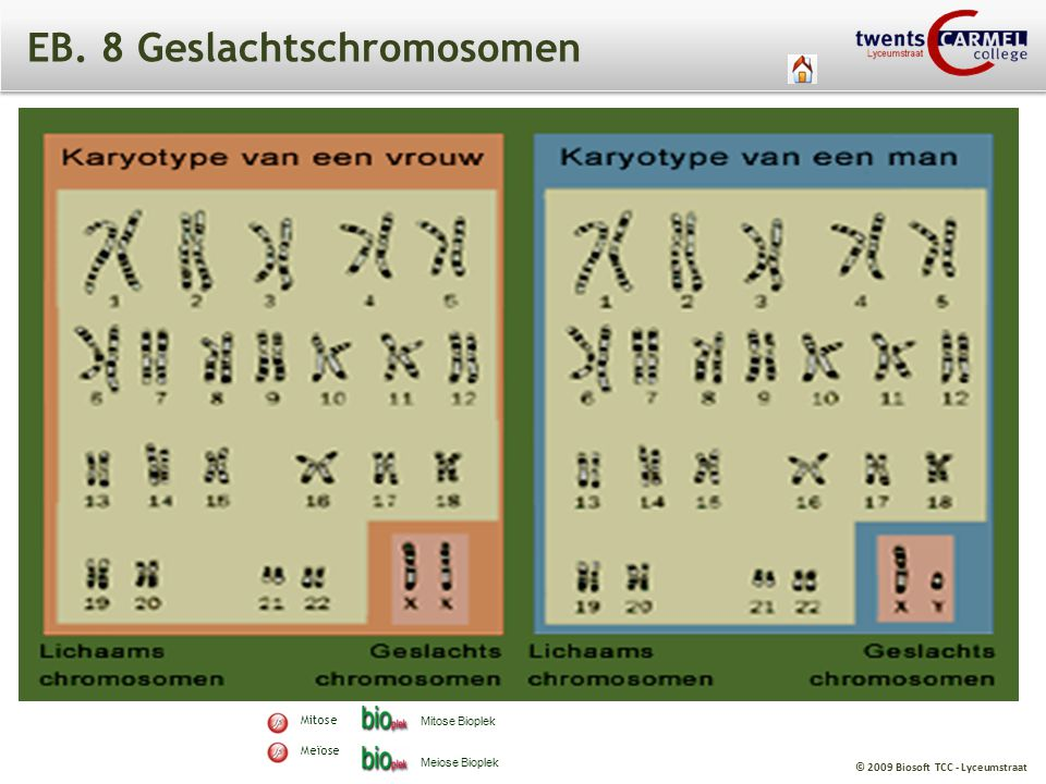 EB. 8 Geslachtschromosomen
