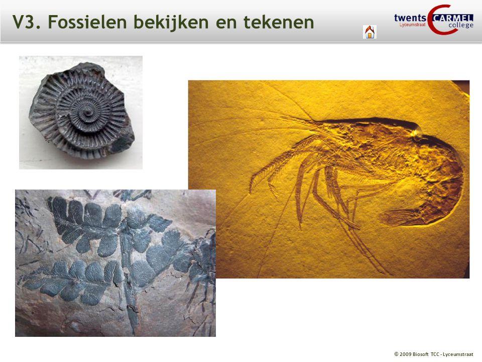 V3. Fossielen bekijken en tekenen