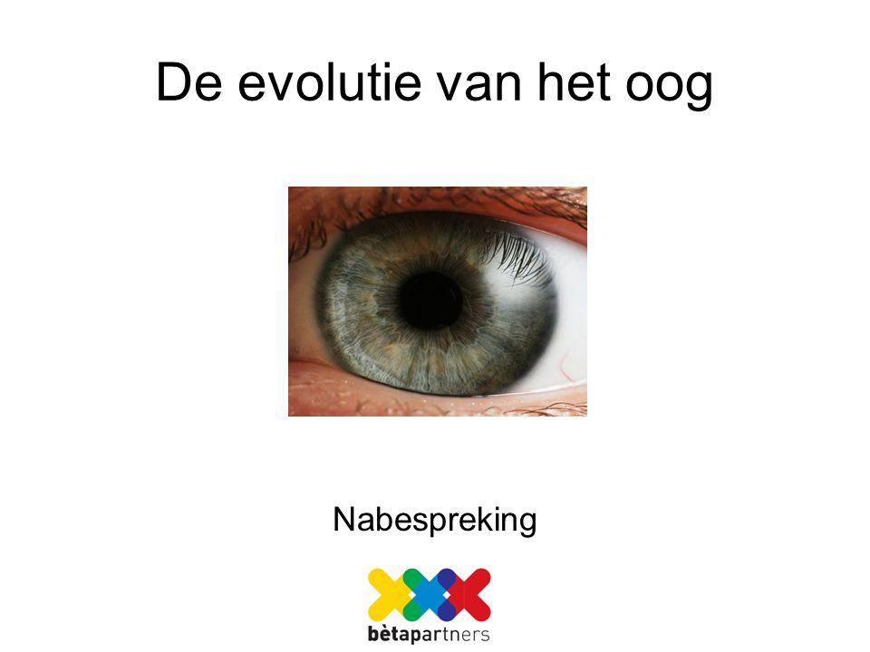 De evolutie van het oog Nabespreking