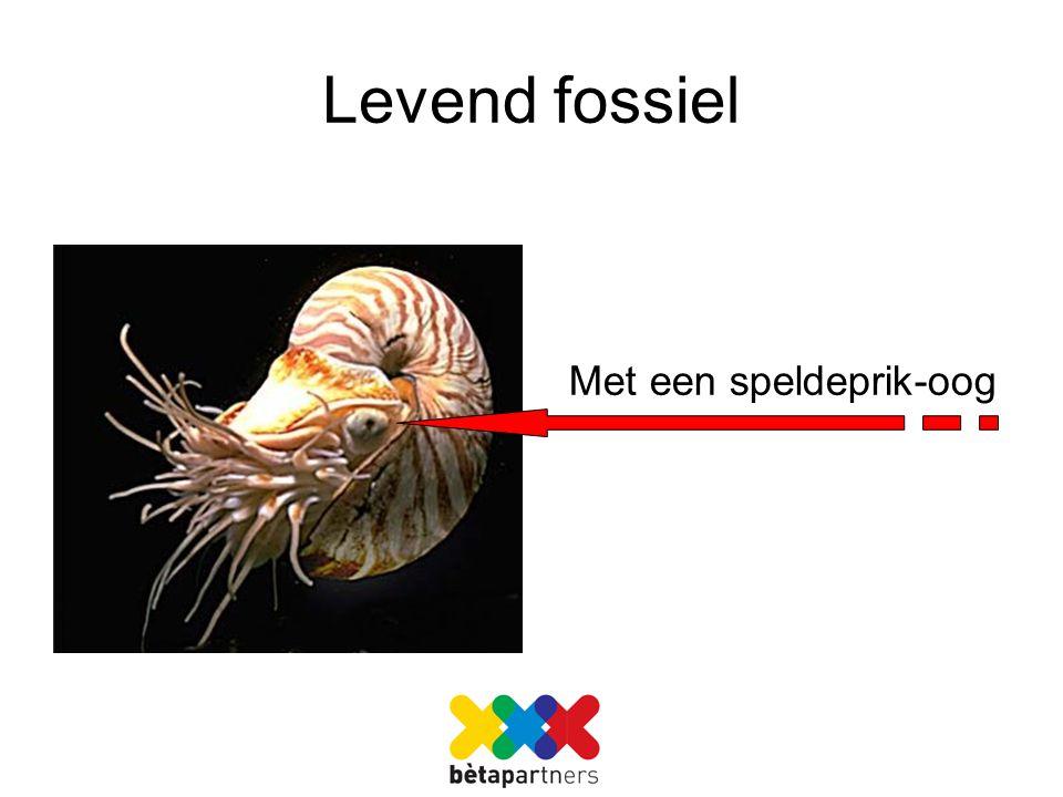 Levend fossiel Met een speldeprik-oog
