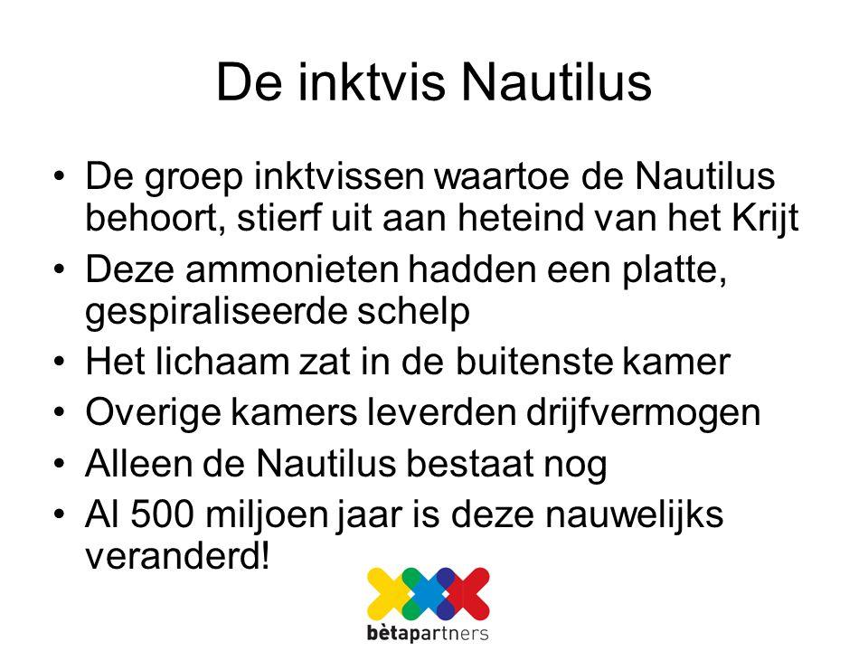 De inktvis Nautilus De groep inktvissen waartoe de Nautilus behoort, stierf uit aan heteind van het Krijt.