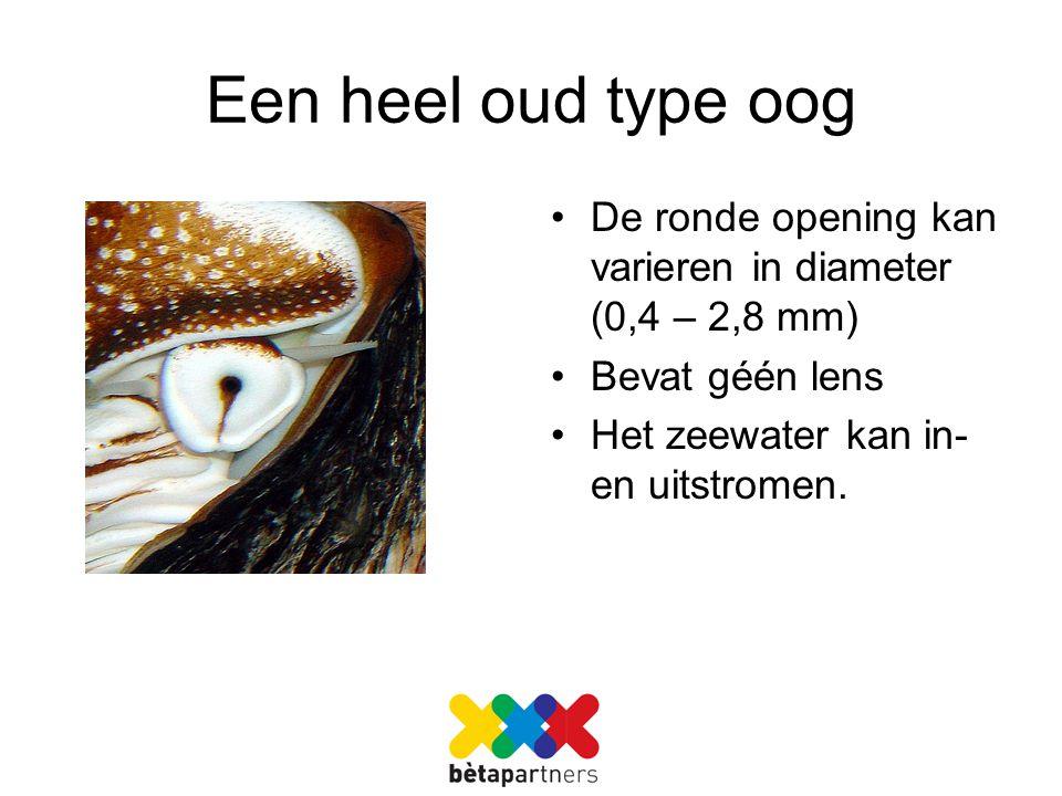 Een heel oud type oog De ronde opening kan varieren in diameter (0,4 – 2,8 mm) Bevat géén lens.