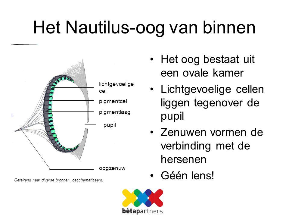 Het Nautilus-oog van binnen