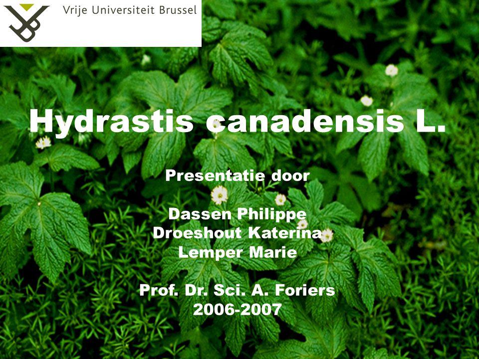 Hydrastis canadensis L.