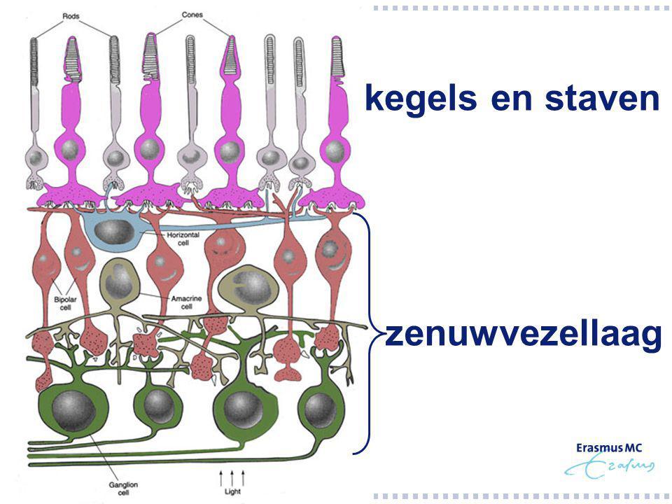 kegels en staven zenuwvezellaag