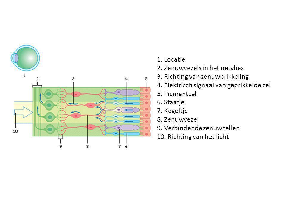 1. Locatie 2. Zenuwvezels in het netvlies. 3. Richting van zenuwprikkeling. 4. Elektrisch signaal van geprikkelde cel.
