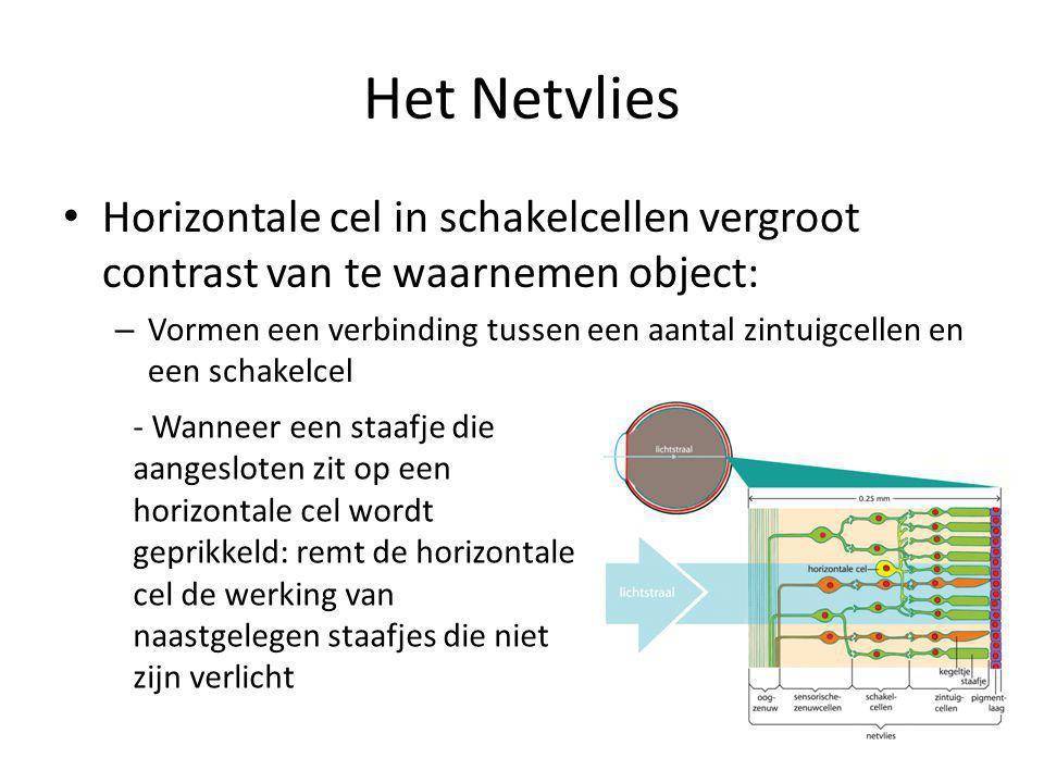 Het Netvlies Horizontale cel in schakelcellen vergroot contrast van te waarnemen object: