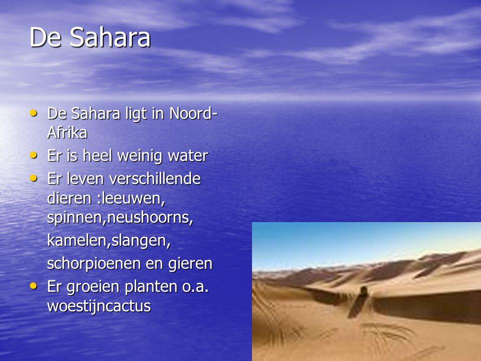 De Sahara De Sahara ligt in Noord- Afrika Er is heel weinig water