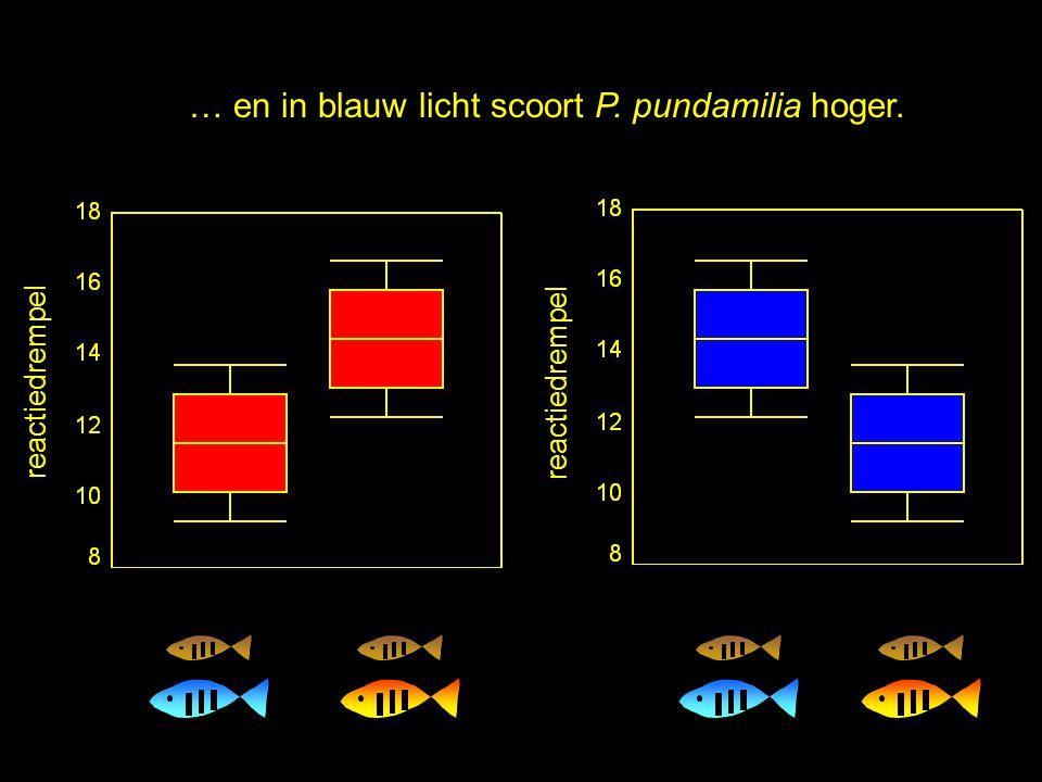 … en in blauw licht scoort P. pundamilia hoger.