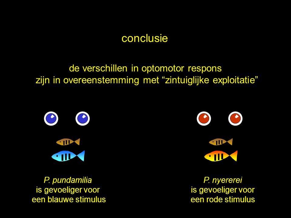 conclusie de verschillen in optomotor respons
