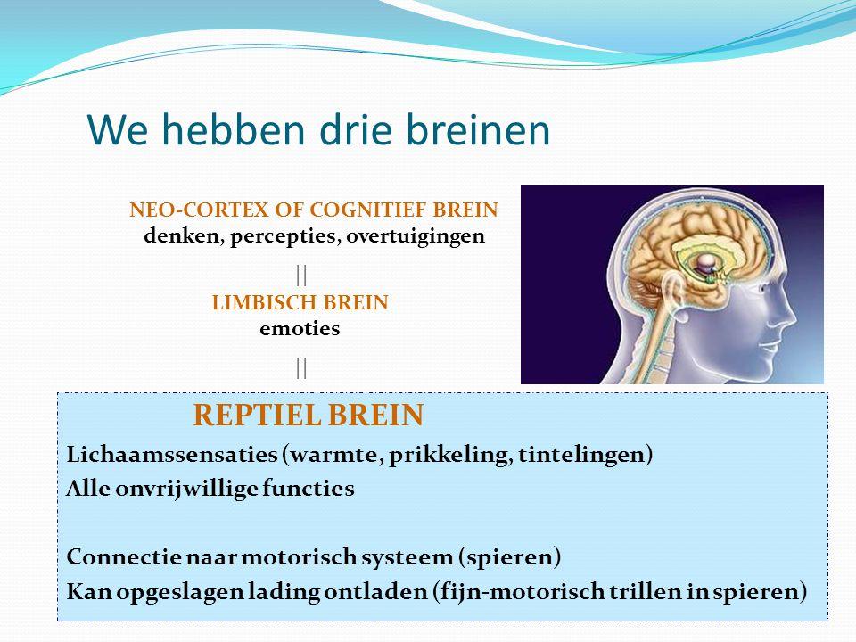 NEO-CORTEX OF COGNITIEF BREIN denken, percepties, overtuigingen