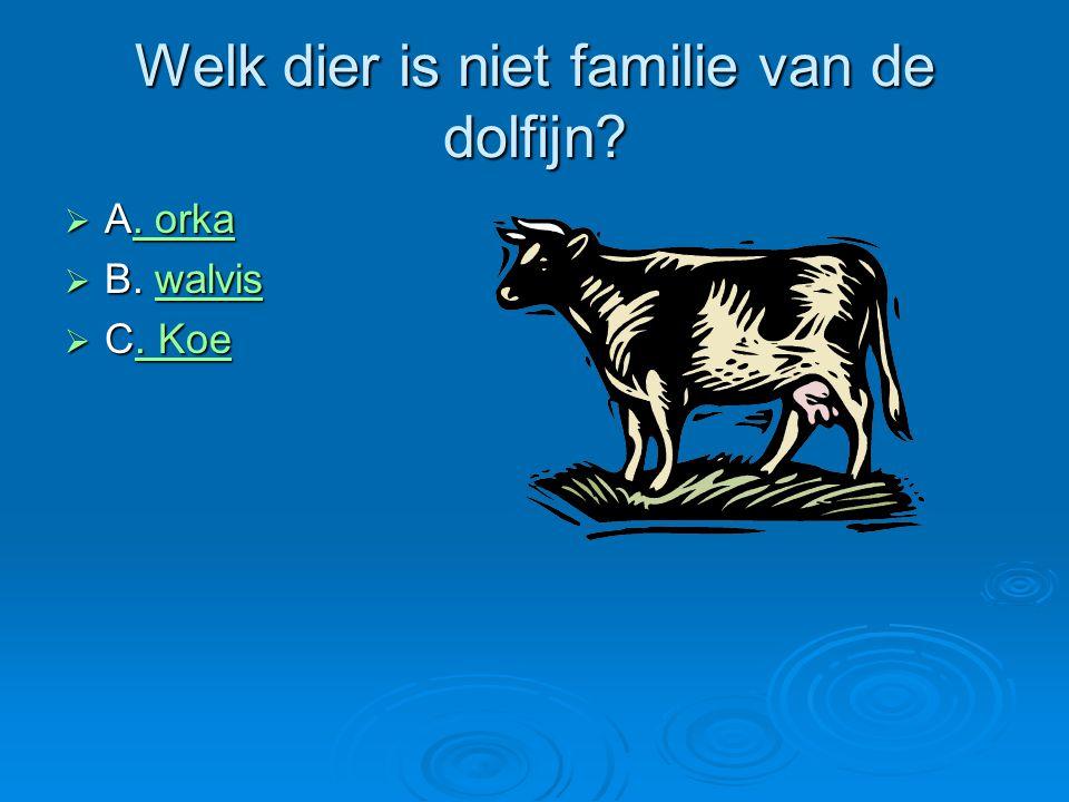 Welk dier is niet familie van de dolfijn