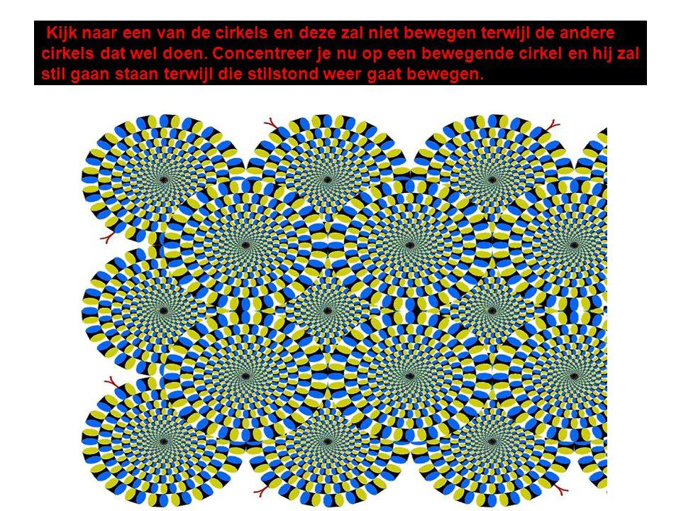 Kijk naar een van de cirkels en deze zal niet bewegen terwijl de andere cirkels dat wel doen.