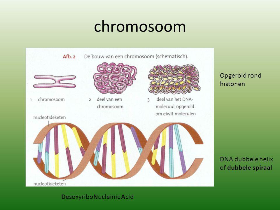 chromosoom Opgerold rond histonen DNA dubbele helix of dubbele spiraal