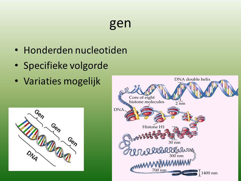 gen Honderden nucleotiden Specifieke volgorde Variaties mogelijk