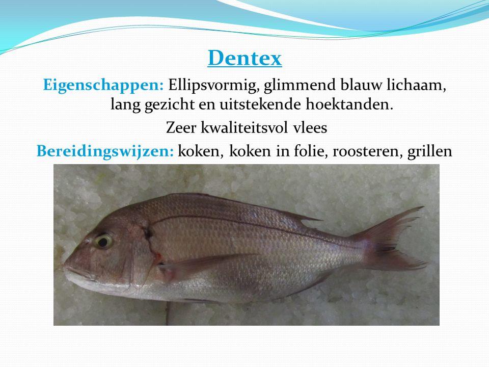 Dentex Eigenschappen: Ellipsvormig, glimmend blauw lichaam, lang gezicht en uitstekende hoektanden.