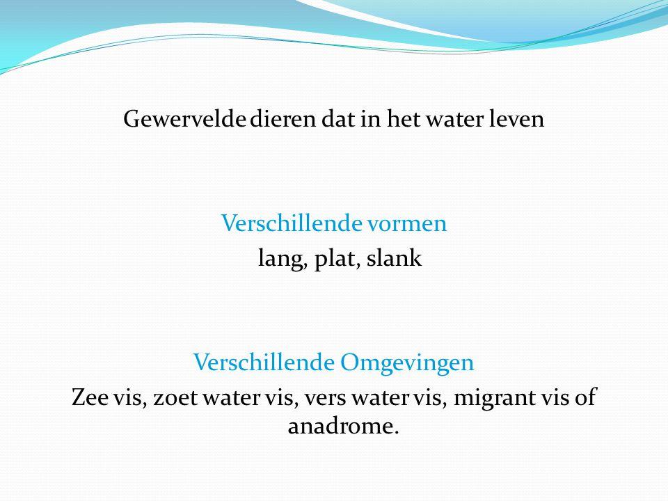 Gewervelde dieren dat in het water leven Verschillende vormen lang, plat, slank Verschillende Omgevingen Zee vis, zoet water vis, vers water vis, migrant vis of anadrome.