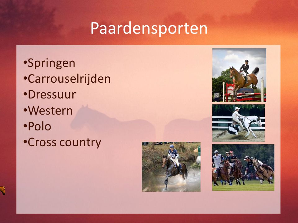 Paardensporten Springen Carrouselrijden Dressuur Western Polo