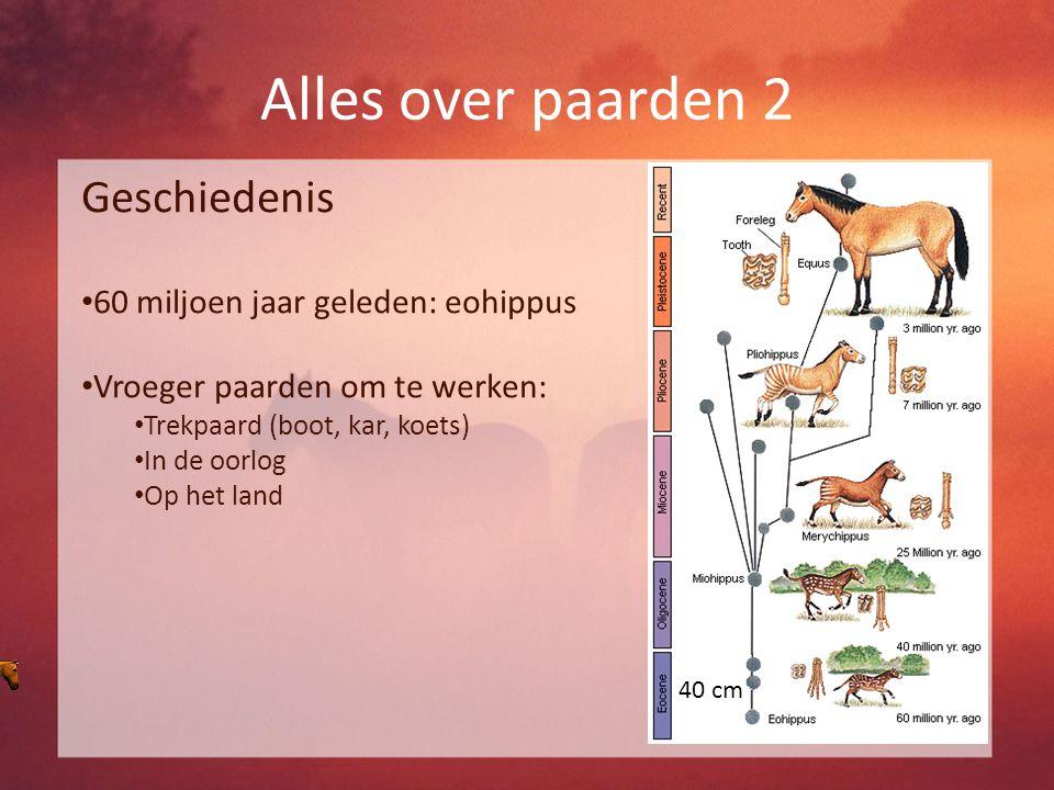 Alles over paarden 2 Geschiedenis 60 miljoen jaar geleden: eohippus