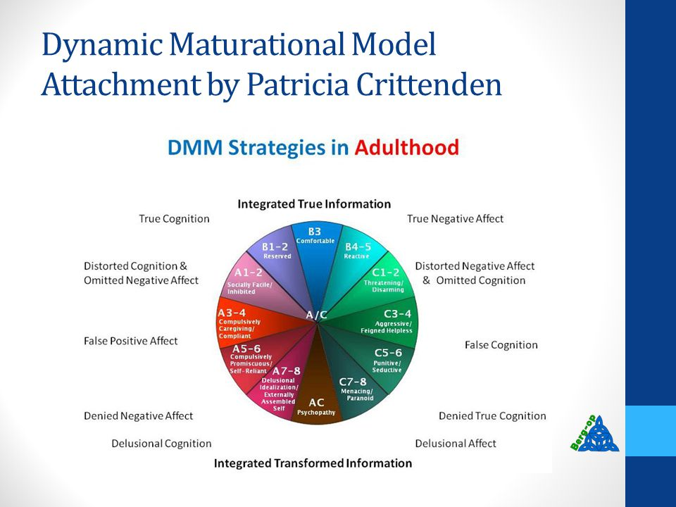 Dynamic Maturational Model Attachment by Patricia Crittenden
