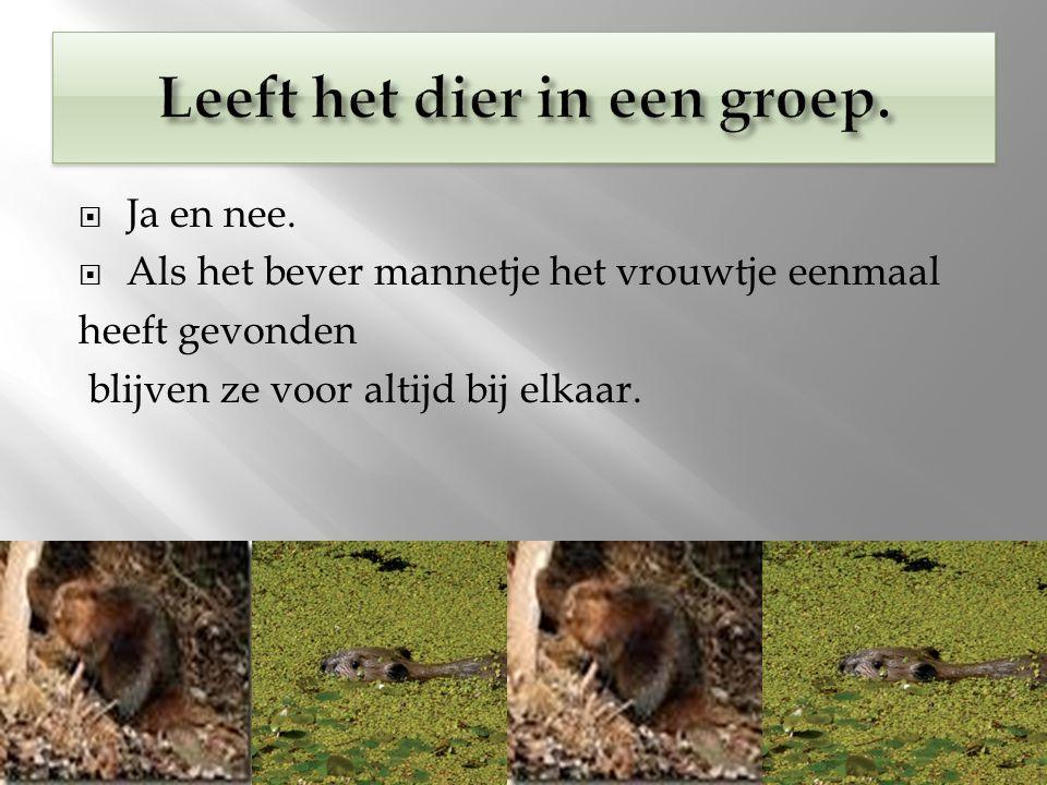 Leeft het dier in een groep.