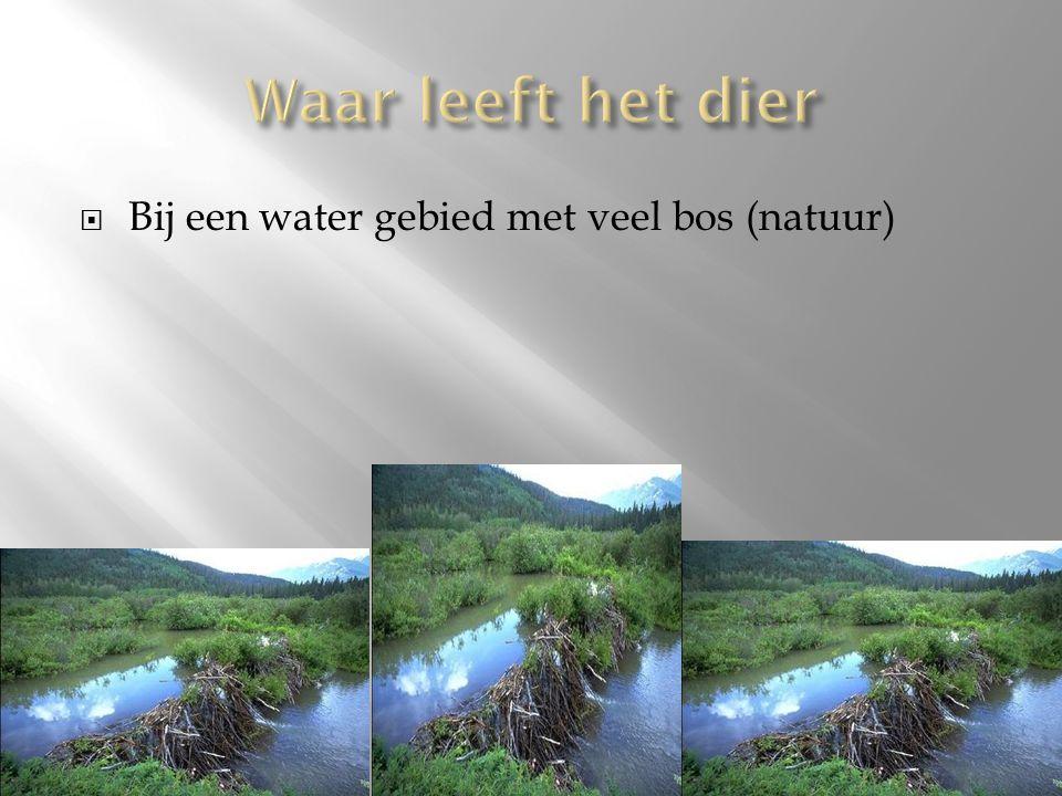 Waar leeft het dier Bij een water gebied met veel bos (natuur)