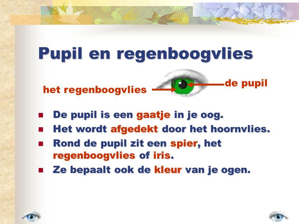 Pupil en regenboogvlies