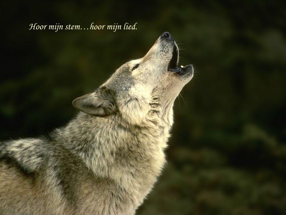 Hoor mijn stem…hoor mijn lied.