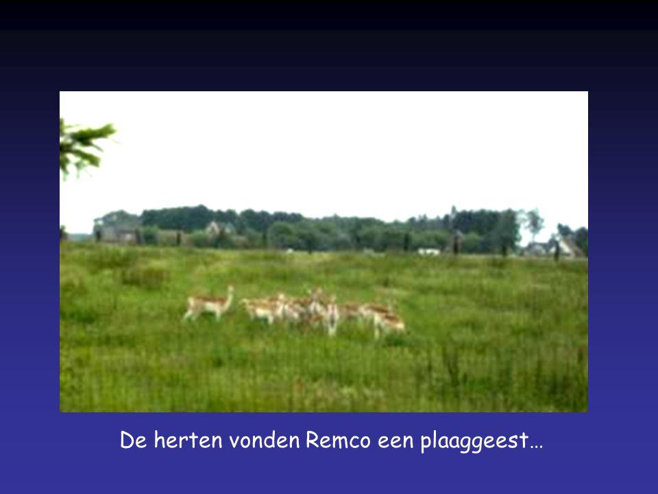 De herten vonden Remco een plaaggeest…