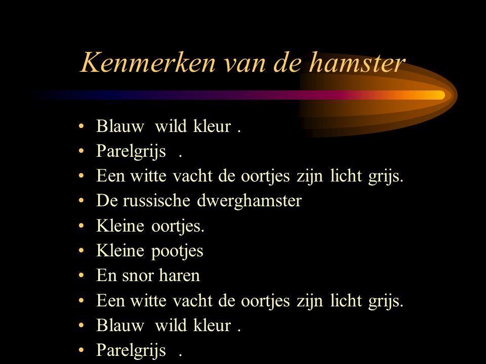 Kenmerken van de hamster