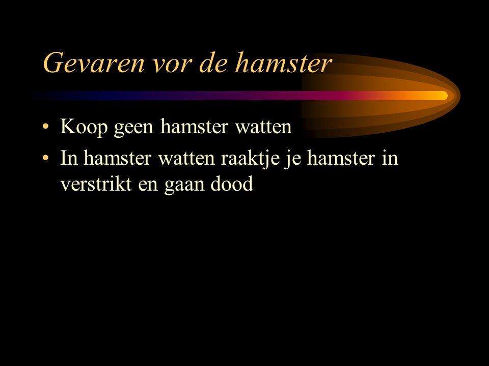 Gevaren vor de hamster Koop geen hamster watten