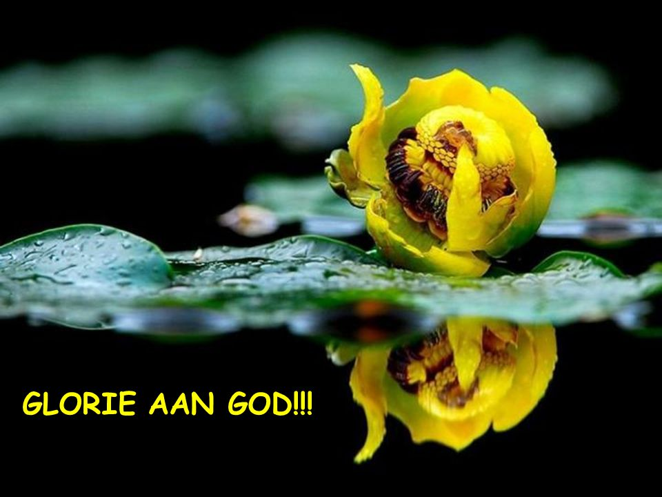 GLORIE AAN GOD!!!