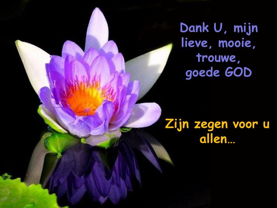 Dank U, mijn lieve, mooie, trouwe, goede GOD Zijn zegen voor u allen…