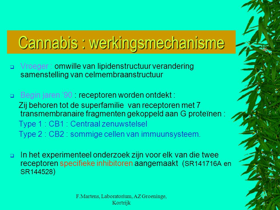 Cannabis : werkingsmechanisme
