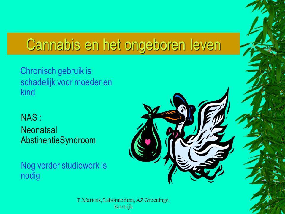 Cannabis en het ongeboren leven
