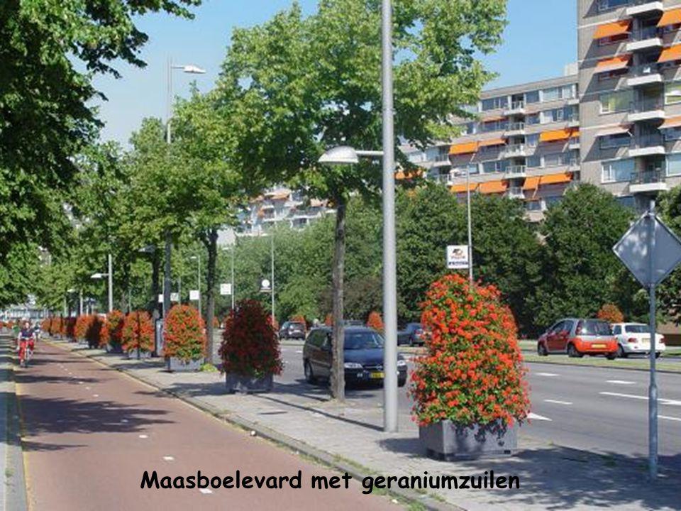 Maasboelevard met geraniumzuilen