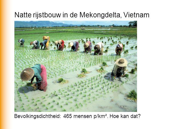 Natte rijstbouw in de Mekongdelta, Vietnam