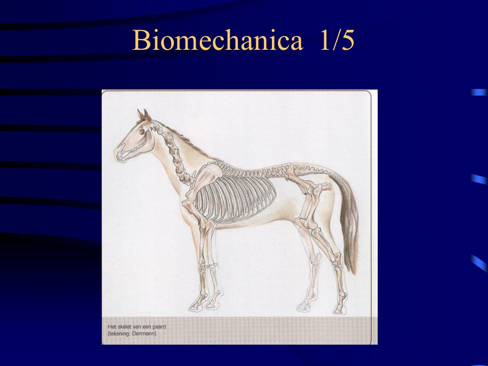 Biomechanica 1/5